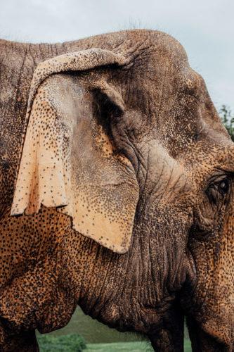 Elefantendame Nanda, Zoo Karlsruhe